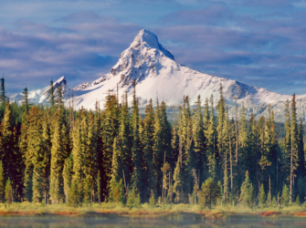 Bend forest and mountain